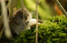 nature animal mouse beautiful high quality animal photos widescreen pictures of animals