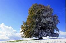 Ausmalbilder Herbst Und Winter Allg 228 Uer Herbst Winter Kollektion Foto Bild