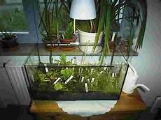 fleischfressende pflanzen mit flora pflanzenle