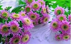 incredible pictures flowers