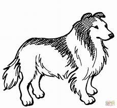 Ausmalbilder Hunde Border Collie Ausmalbilder Hunde Border Collie Amorphi
