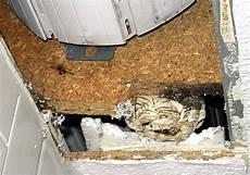 wespen im mauerwerk rolladenkasten abdichten insektenschutz zur abdichtung