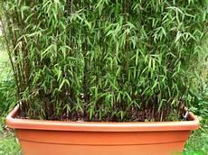 bambus für balkon bambus na mały balkon