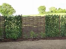 Natürlicher Sichtschutz Im Garten - sichtschutz aus haselnuss in 180x180 cm www garten