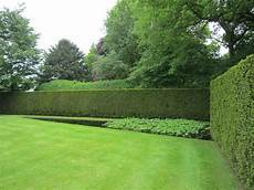 faire une haie qui pousse vite gardendesign verbruggen backyard garden design