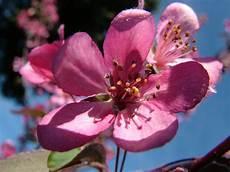 fiori di bach menopausa coaching and flowers tremenda voglia di vivere fiori di