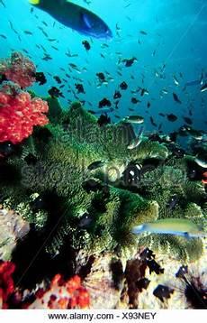 Unterwasser Tiere Malvorlagen Englisch Zoologie Tiere Hautverletzungen Korallenriff Mit