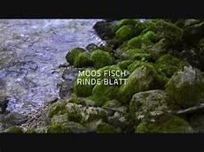 bücher second moos fisch rinde blatt genuss der landschaft