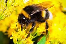 bienen niedrigere klassifizierungen of bees babies and whey you go broad associates