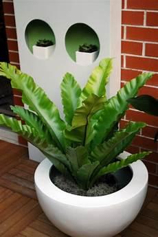 Pflanzen Wenig Licht - 1001 ideen f 252 r zimmerpflanzen f 252 r wenig licht