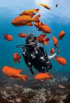 underwater dive center beginning scuba diving