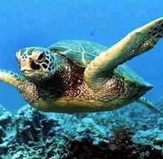 Malvorlagen Unterwasser Tiere Rom Tiere Schildkr 246 Ten Lebten Zuerst An Land Welt