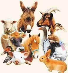 animaux de la ferme animaux de la ferme espagnol