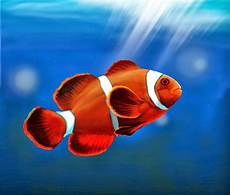 Fish Gambar Ikan Hias Clownfish 5