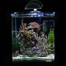great bargains at small starter aquariums at zooplus