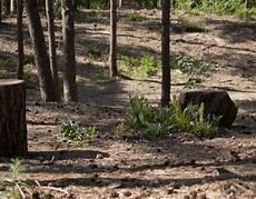 venlo maasbree begraven in de natuur