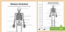 parts of the human skeleton worksheet science resource