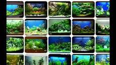 aquarium deko ideen aquarium dekorieren tipps ideen
