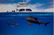 oceanic dive oceanic whitetip shark diving epic diving
