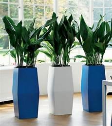 Zimmerpflanzen F 252 R Dunkle Standorte Geeignet Interior