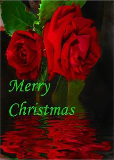 merry christmas rose images rose reflected merry christmas photograph by joyce dickens