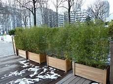 grande jardinière pour bambou planter le bambou en pot pivoine etc
