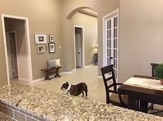 interior paint color reviews behr interior paint reviews decoratingspecial com