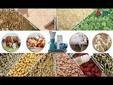 how to make feed pellets animal feed pellet making machine youtube