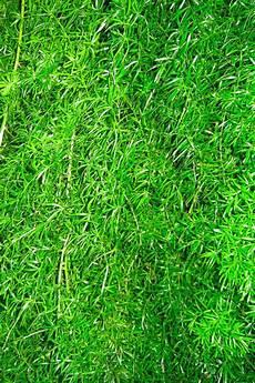 grass flower wallpaper iphone grass iphone wallpaper hd