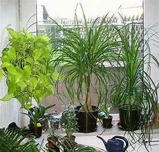 pflanzen fürs schlafzimmer feng shui pflanzen begutachten