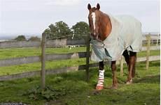 Op Versicherung Pferd - pferde op versicherung pferdekrankenversicherung die