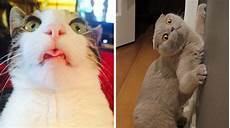 19 pictures that prove cats are not only cute but also
