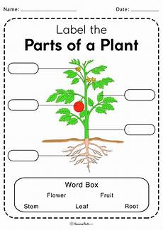 parts of a plant worksheets free printable