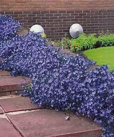 30 Canules Des Rocailles Plantes Vivaces Pour Le Jardin