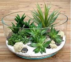 plante succulente entretien succulentes vari 233 t 233 s entretien floraison rempotage