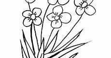 Gambar Mewarnai Bunga Rumput Contoh Gambar Hitam Putih Di