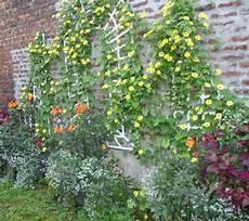 fleurir un jardin de ville c est souvent des conditions
