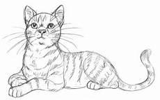 38 warrior cats ausmalbilder besten bilder ausmalbilder