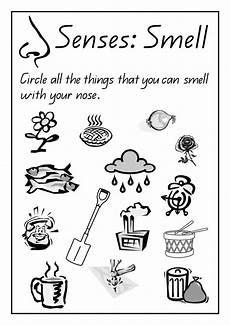 kindergarten science worksheets homeschooldressage com