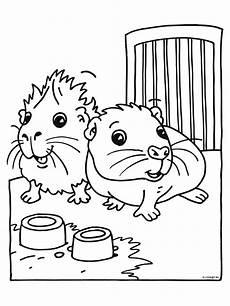 guinea pig coloring pages coloringpages1001