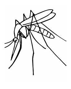 ausmalbilder insekten kostenlos zum ausdrucken