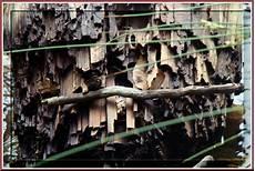 holz holzstrukturen 1 holz im wasser foto bild natur