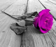 Beautiful Flower Wallpaper Zedge by 74 Best Images About Zedge Wallpaper On Mobile