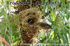 welcher vogel baut welches nest nest vogelnester welcher vogel baut welches nest