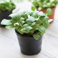 Pflanzen Für Dunkle Ecken In Der Wohnung - zimmerpflanzen f 252 r dunkle ecken mein sch 246 ner garten