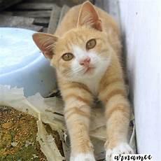 Fotografi Gambar Kucing Comel Arnamee
