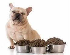 croquette chien comparatif des croquettes pour chien