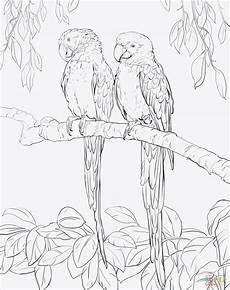 Ausmalbilder Regenwald Tiere Malvorlage Jungle Tippsvorlage Info Tippsvorlage Info