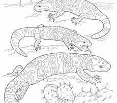 desert animals coloring pages printable 16950 printable pictures of desert animals and plants printable coloring pages of desert plants