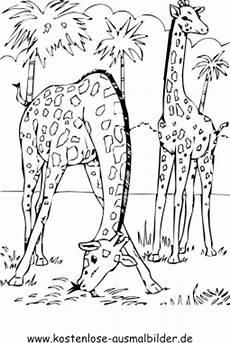 ausmalbild giraffen zum ausdrucken